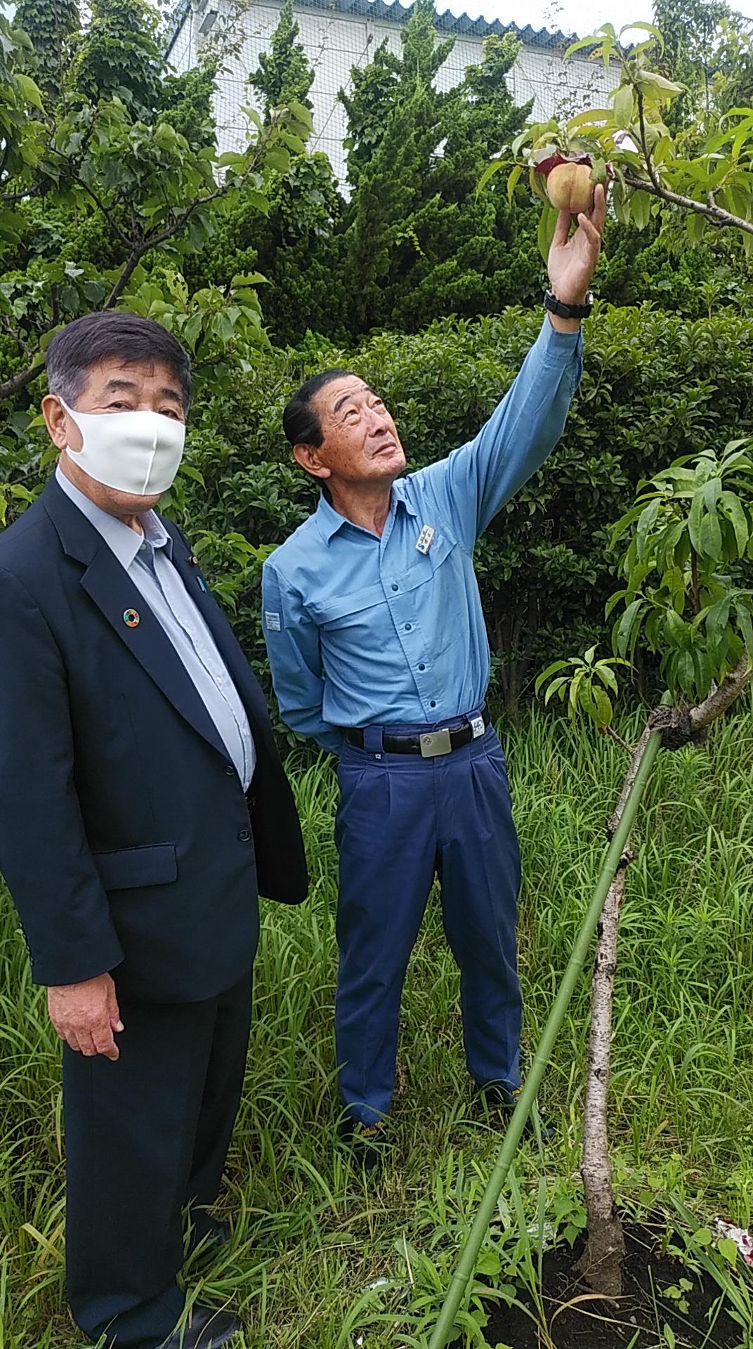 7月10日(金)<昭和電工で伝十郎桃の収穫を祝う>